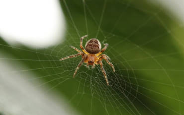 Good Spiders vs. Spiders You'll Want to Move 2,000 Miles Away From