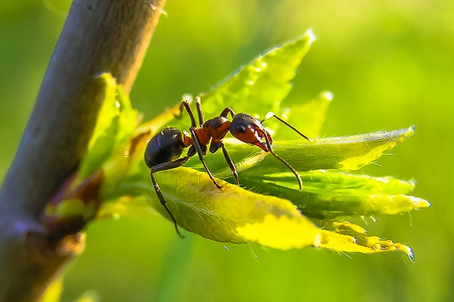 """Fun"" Facts about Ants"