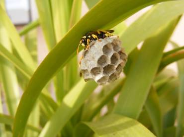 Bees vs. Wasps vs. Hornets: The Ultimate Battle
