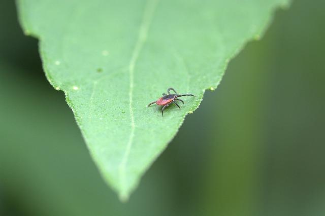 True & False Facts about Ticks