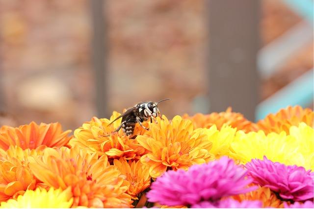 Click-a-Pest: Hornet | Hornet Extermination | Pest Boss