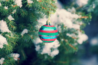 Pests You Don't Want to Find in Your Christmas Tree