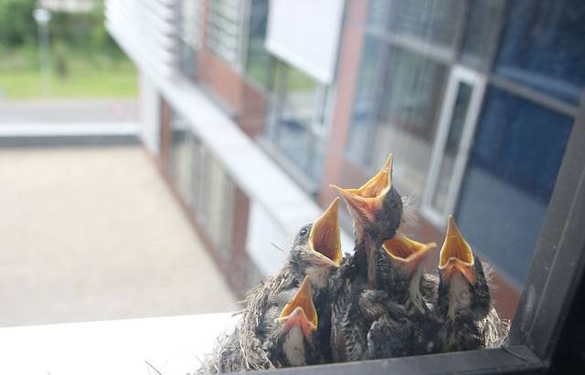 Bird Control Tips: How to Make Your Home Less Appealing to Birds