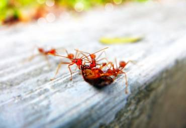 Ant Control Tips: 5 Ways to Keep Them Away From Your Home