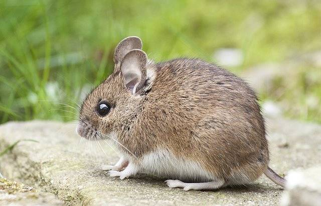 7 Signs You Need Professional Rodent Control ASAP